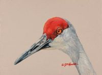 Painting of a Sandhill Crane